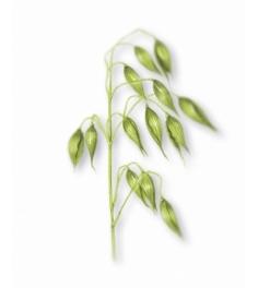 ¿Cuáles son los beneficios del Champú seco de Klorane?-