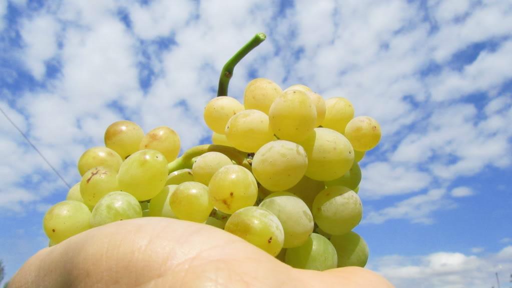 Vinoterapia- los beneficios de la uva en la piel