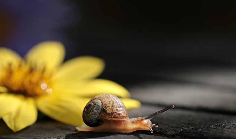 6 beneficios de la baba de caracol - ¡Siéntete Guapa!