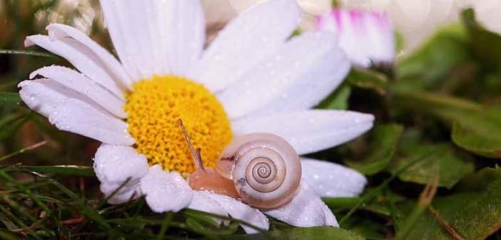 5 beneficios de la baba de caracol