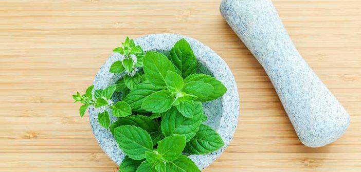 Infusión de hierbabuena para cuidar la piel grasa - ¡Siéntete Guapa!
