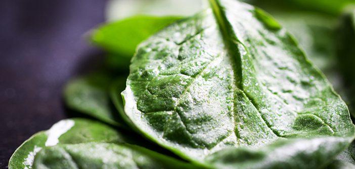 5 alimentos para quemar grasas - ¡Siéntete Guapa!