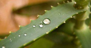 7 beneficios del aloe vera para la piel